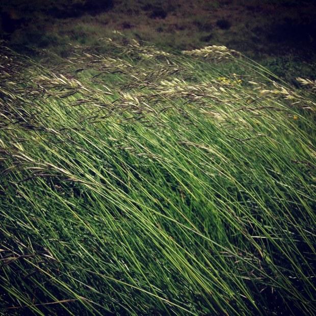 reed-wind